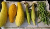 Squash, Beans, Corn