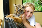 You can even bring the kids to work! Our cubs are very playful