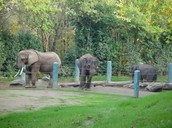 Elephants Exhibit