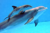 baby dolphins