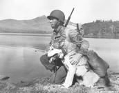 Dogs In World War I