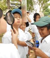 Examining the samples