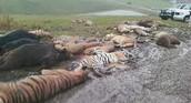 50 exotic pets die