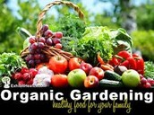 FAMILY ORGANIC GARDEN PROGRAM ---------- Friday, May 20 –June 17----3:30–5 pm
