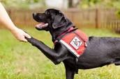 training dog different ways