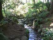 Stream (water source)