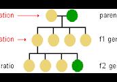 genetics stem