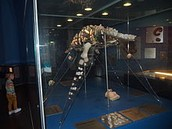 Dinosaur bone fossil Opal