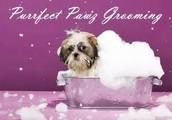 Dog Grooming Strategies for Beginners