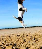 She can jump