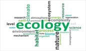 Ecology Word Puzzle