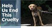Why harm innocent animals?