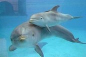 delfín con su cría