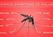 What are signs and symptoms of malaria?