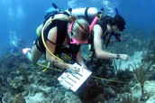 Marine Biologists are studying organisms.