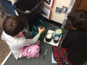 Measuring the Little Blue Penguin's weight.