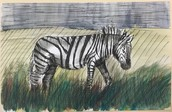 Daily Experiment- Zebra Watercolor
