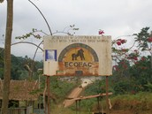 Monte Alen National Park in Equatorial Guinea
