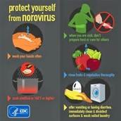 Noravirus