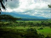 South American Savanna