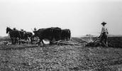 Farming back then