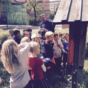 1d - learning about bees