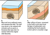 How are fossils formed ?