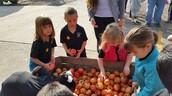 Choosing an apple to enjoy