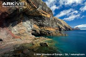 Mediterrenean monk seal habitat
