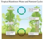 Water/Nutrient Cycle