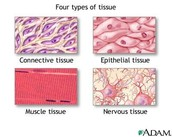 What is tissue?
