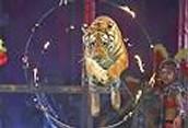 circuses animals