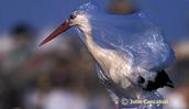 A bird stuck in a plastic bag