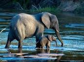 The Botswana sights.
