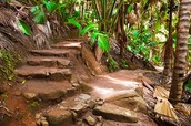 Vallée de Mai National Park