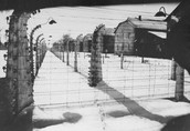 """Auschwitz, also known as """"The Camp of Death"""""""