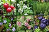 Taigas plants