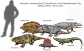Some late Carboniferous In the Early Permian Time Peiod