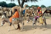 Fleeing for Chad