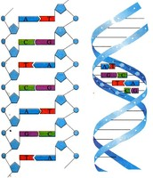Where is DNA?