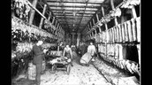 A meat packing  storage room