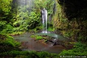 A small waterfall in the Tropical Rainforest