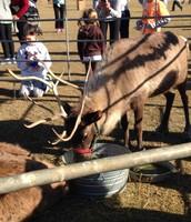 Reindeer Petting Zoo