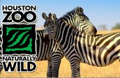 Houston Zoo - Field Trip
