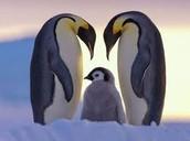 WEEKLY THEME: Polar Zoo- Part II - The Antarctic