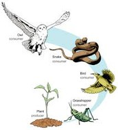 the food chain ,plant are important to animals
