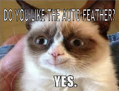 Even Grumpy cat loves the Auto Feather