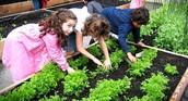 School Gardens Take Bloom