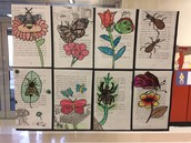 Insect and flower drawings