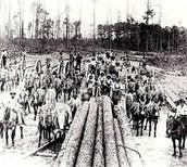 Abundant Land = Loads of lumber